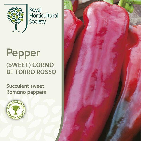 Buy sweet pepper / Capsicum annuum var. annuum (Grossum Group) 'Corno di Toro Rosso' sweet pepper 'Corno di Toro Rosso': Delivery by Crocus