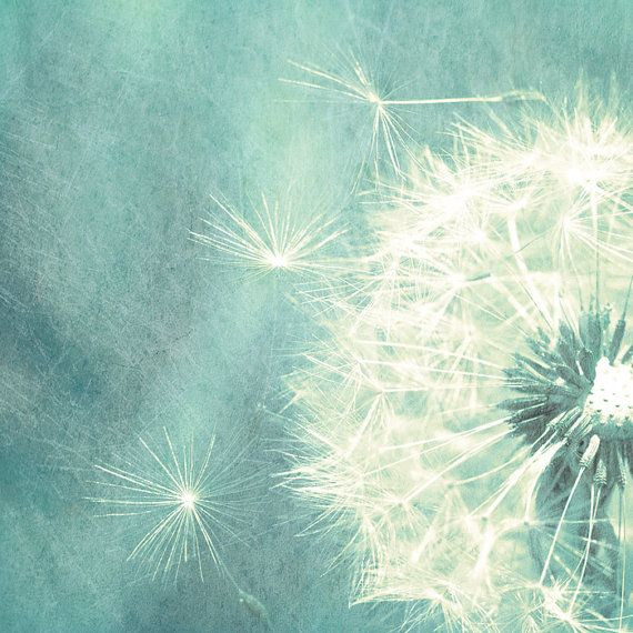 teal dandelion painting   ... flower photography dandelion seed teal art print shabby chic neutrals