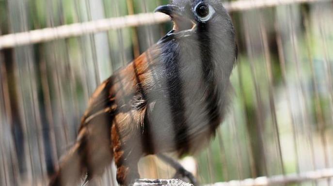 Pin Di Burung