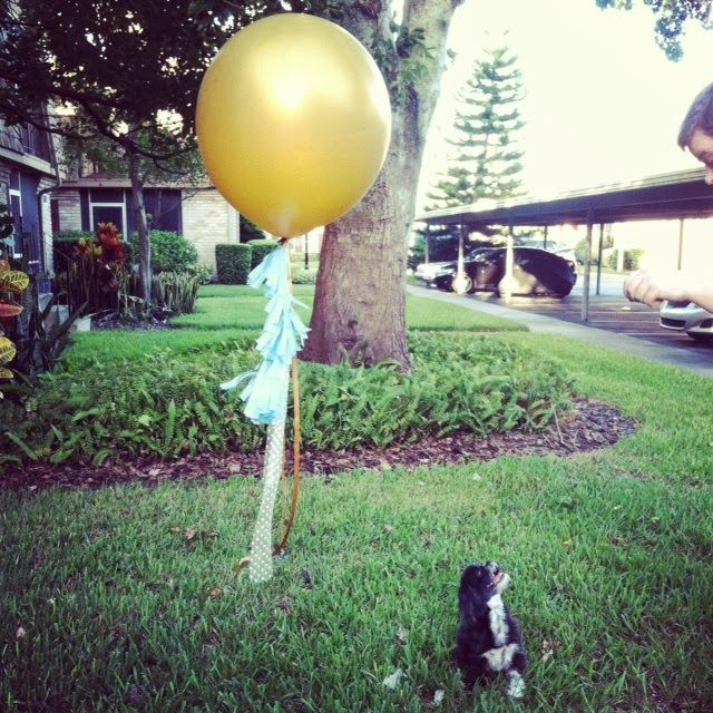 polly girl's adoption day celebration with DIY geronimo balloons