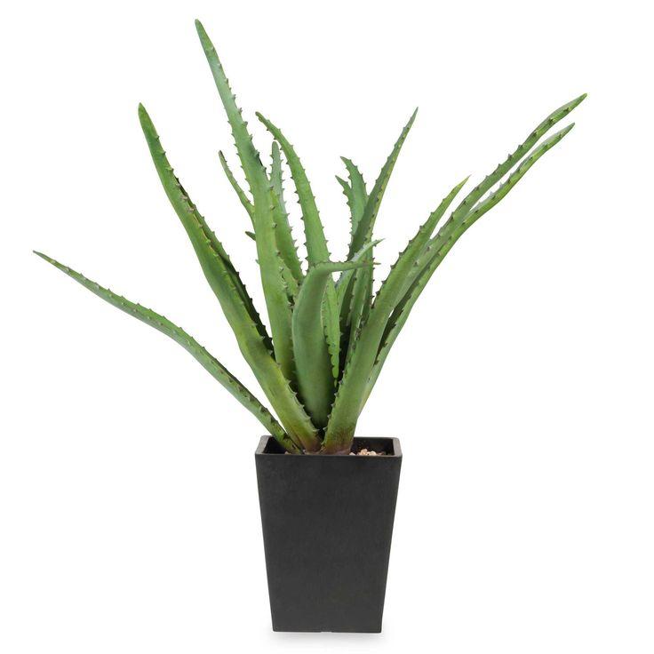 17 Best Ideas About Aloe Vera Pflanze On Pinterest | Aloe Pflanze ... Aloe Vera Pflanze