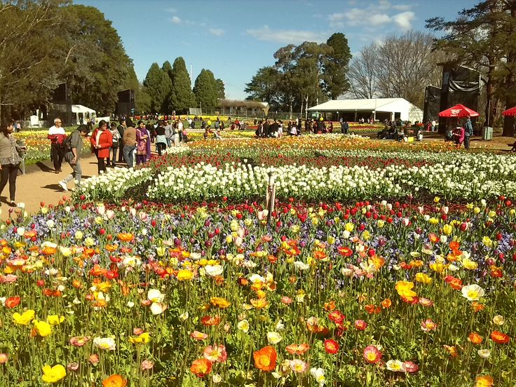 Floriade 2013 in Canberra. Beautiful display of Tulips. ttp://www.ozehols.com.au/blog/australian-capital-territory/floriade-canberra/ #floriade #canberra #southcoast #ACT