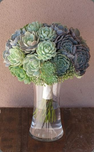 Selection of succulents - you could incorporate one or two small ones into your bouquet - these are really plants so after the wedding you could plant them as a keepsake!
