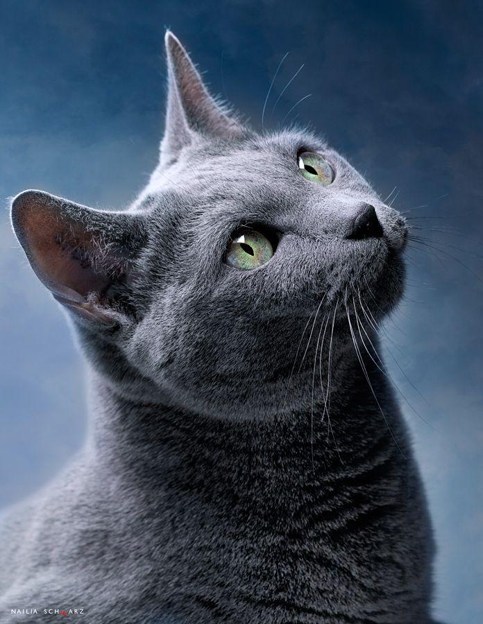 cats destiny 2
