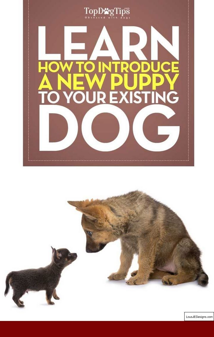 Best Way To Potty Train A Full Grown Dog And Pics Of Best Tips For