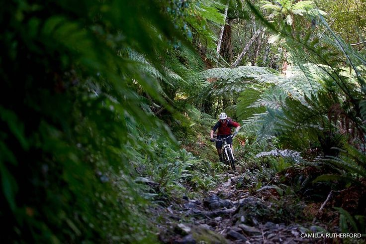 Mike Hopkins on the Nydia Track New Zealand. #BikeMagPOD by @camillarutherford_photography. #mtb