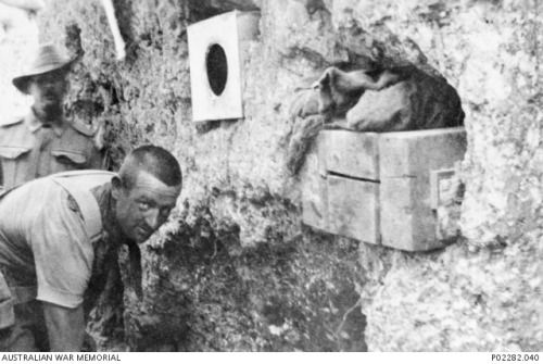 Gallipoli, Turkey, 1915. Two Australian soldiers occupy a deep section of trench, while an empty tin and a wooden crate or trunk have been fitted for storage purposes into cavities hollowed out of the trench wall.