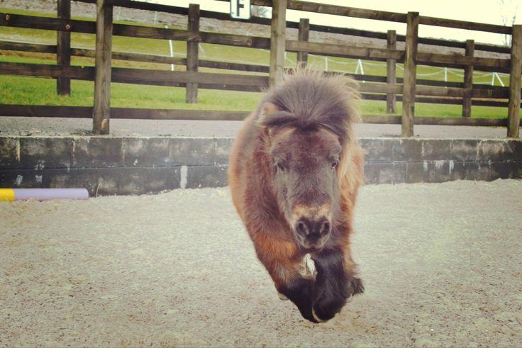 Little Alf