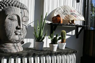 Our buddha sculpture and cacti