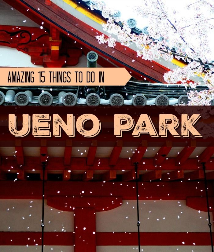 Planning in enjoying a cultural and relaxing day in Tokyo? Here are the top 15 amazing things to do in Ueno Park