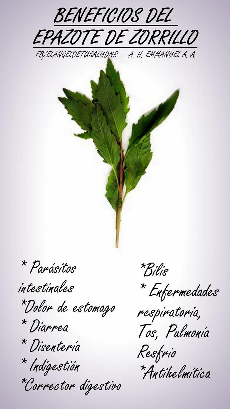 #BENEFICIOSEPAZOTE #BENEFICIOS #SALUD #PLANTASMEDICINALES #MEDICINAALTERNATIVA #NATURISMO