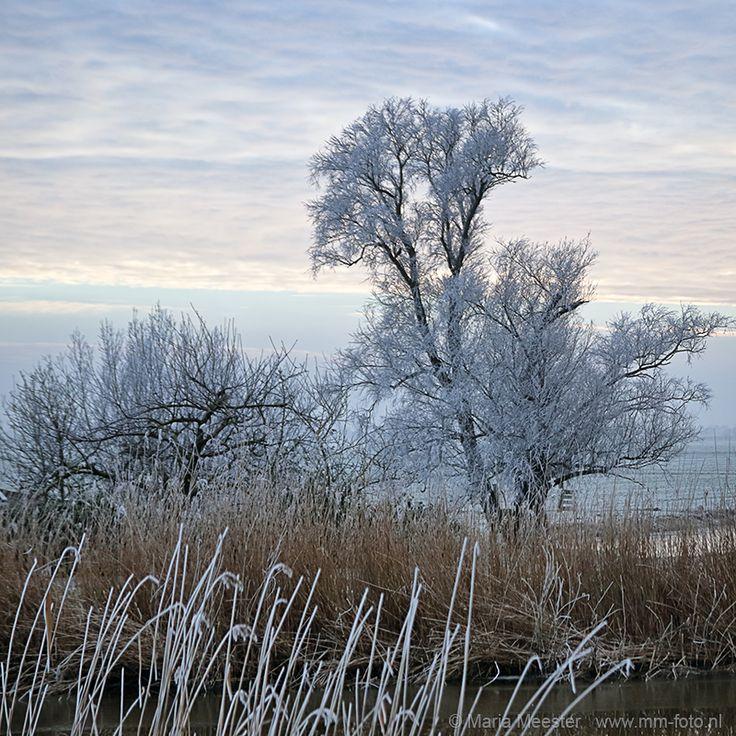 Prachtige bevroren bomen