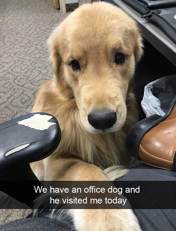 office dog would be coming home with me u003c3 dogmom dogdad rh pinterest com