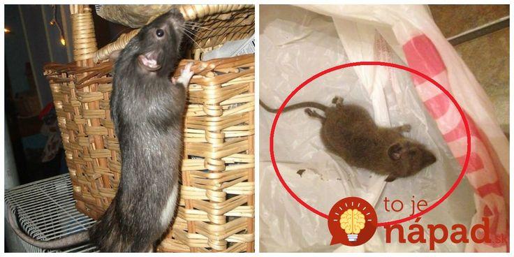 V pivnici skaldujeme úrodu – zemiaky a ďalšiu zeleninu, takže počítame s tým, že sa môžu na jeseň o ňu začať zaujímať myši. Tento rok to však bolo horšie, hlavne preto, že myši sme mali