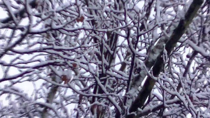 40x ZOOM - Snowfall