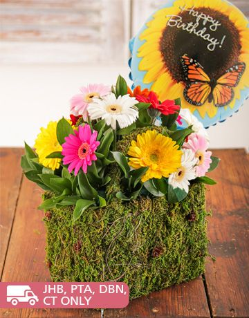 Birthday Presents and Flowers for Her: Moss Basket of Assorted Mini Gerberas with Balloon!