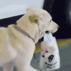 http://aubrylia.a.u.pic.centerblog.net/o/gif-chien-promene-ds-sac.gif