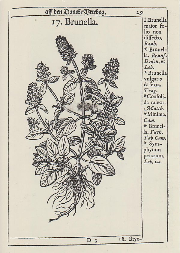 https://flic.kr/s/aHsjEY8Pko | Botanical Drawing