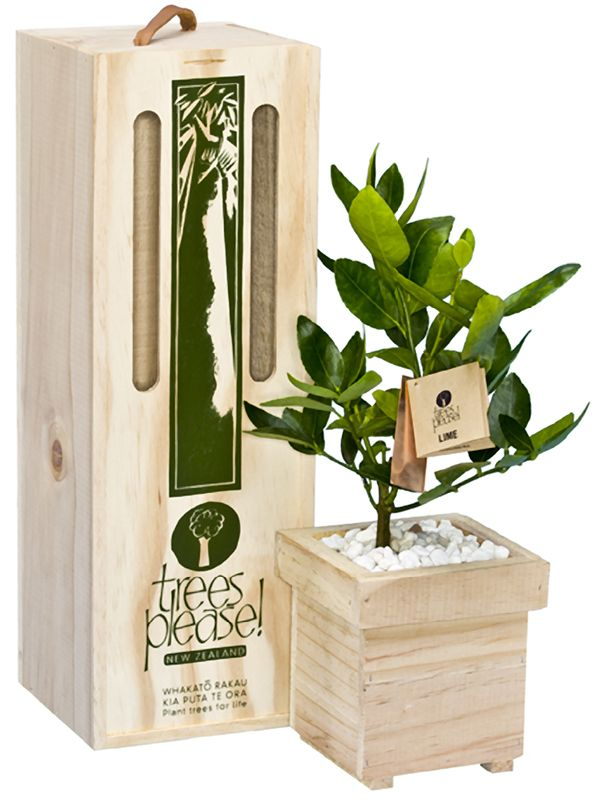 Lemon and Lime trees boxed for delivery in NZ by NZ Trees Please!