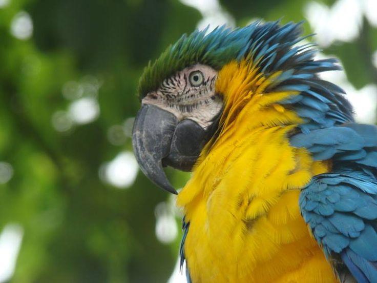 Turismo Animal Ecoturismo