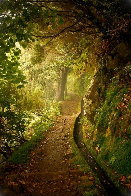 Beautiful mysterious path