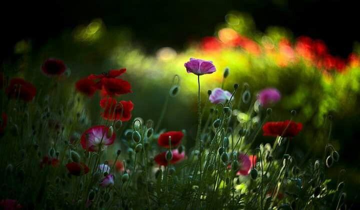 Lasă-mă să te iubesc! Lasă-mă să-ți pătrund în suflet!   Am să-ți deschid porțile sufletului și-am să las primăvara să te învăluie.   Am să te iubesc în culori!