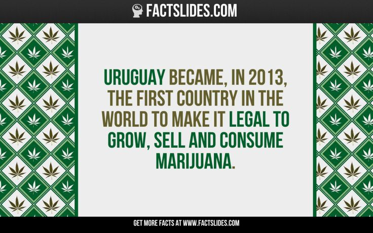 Uruguay became, in 2013, the first country in the world to make it legal to grow, sell and consume marijuana.