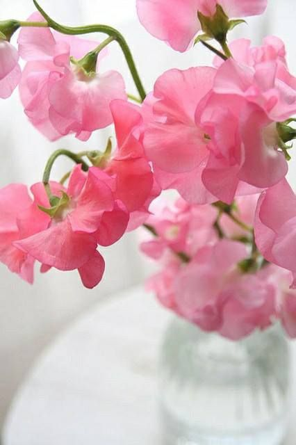 April's flower is the Sweet Pea. This pretty bloom comes in several colors from orange and purple to soft pink and symbolizes modesty and simplicity.