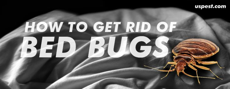 15 Best Images About Tips Get Rid Of The Cockroaches On