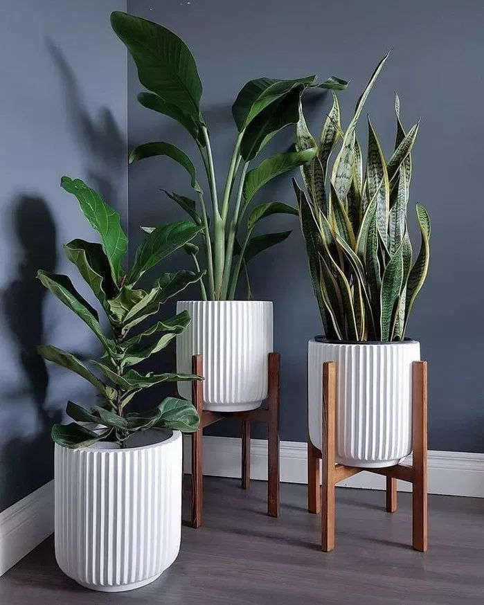 95 beautiful houseplants design in your interior house ~ nycrunningblog.com
