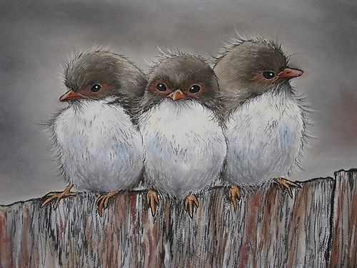 Fairy Wren Family by Sally Ford      every lil thing gonna be alright ~ bob marley ( 3 little birds )