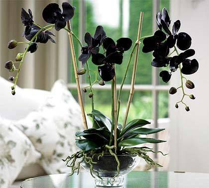 black orchid. terrarium by studio garden