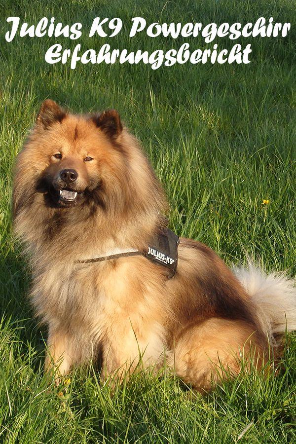 Pin Auf Hundegeschirr Tests Tipps Und Vieles Mehr