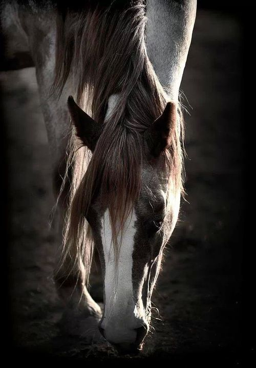 Horses to me are the most amazing animals EVER!  I enjoy collecting photos of them.
