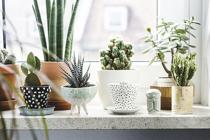 Autant que j'ai besoin d'ouvrir mes fenêtres tous les jours, je ne conçois pas un appartement sans plantes vertes. Leur présence, en plus d'être vraiment bienfaisante pour l'air que nous respirons, m'apporte une fraîcheur visuelle et mentale dont je ne saurais me passer – un peu comme l'effet d'une grande balade en forêt, à échelle miniature. J'aime aussiLire la suite…