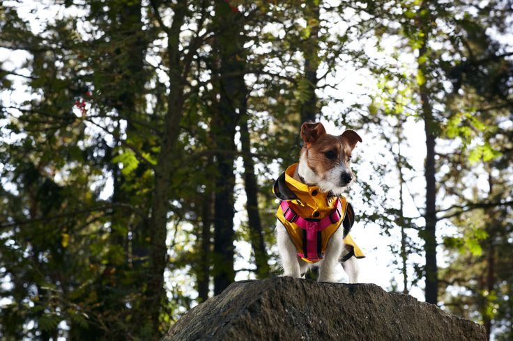Form harness and Stream Raincoat - Spring / Summer 2017 by Rukka Pets