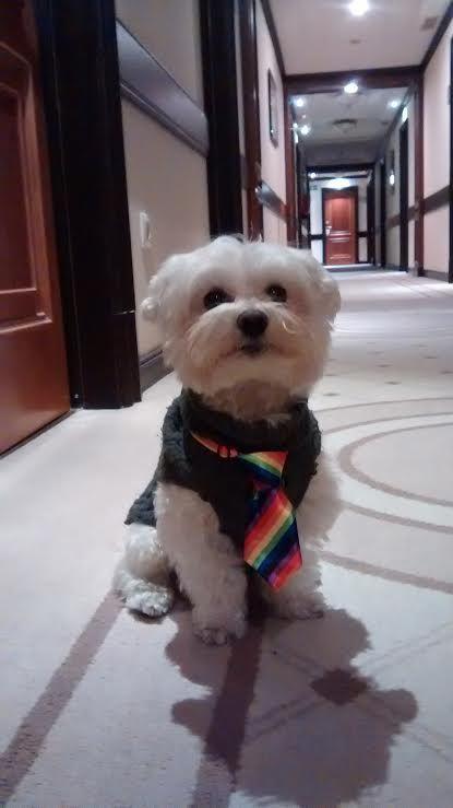 Max con corbata,  super elegante celebrando la Navidad :)