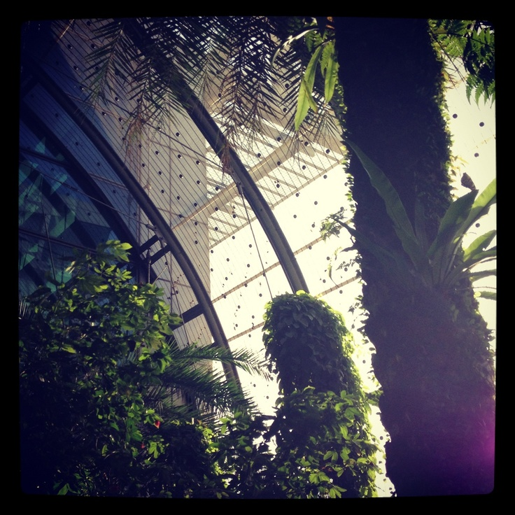 Butterfly Garden, Singapore