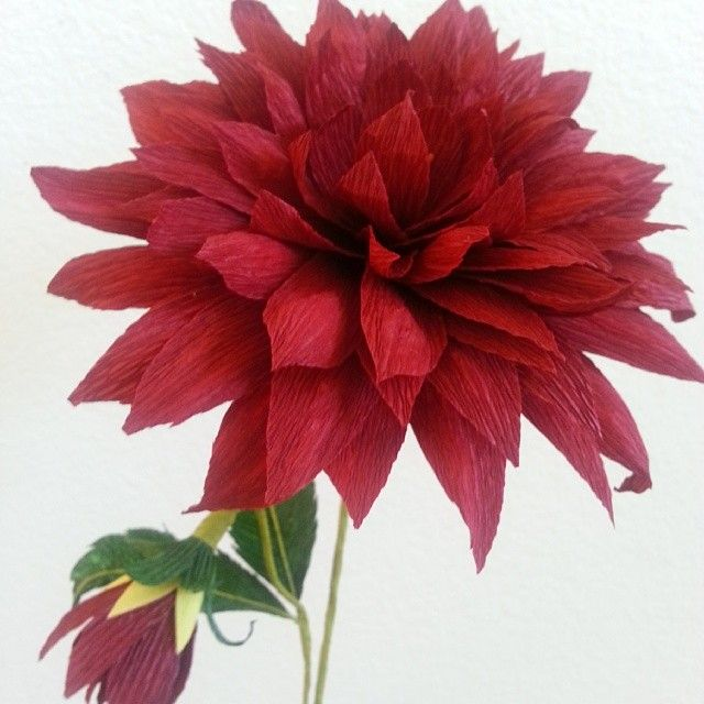 Crepe paper dahlia. #crepepaperflower #crepepaper                                                                                                                                                                                 Mais