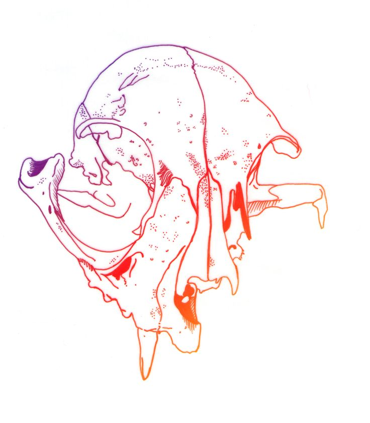Skull, por Raquel Botelho t-shirt http://www.vandal.com.br/p/692