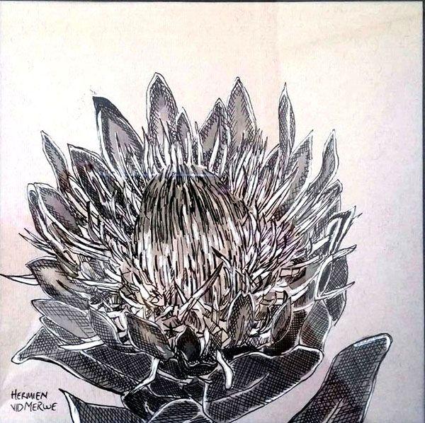 Hermien Van Der Merwe; Title: Fynbos:  Kroonblare (Crown Petals) Medium: Pen-and-Ink drawing on paper with oil paint background Size: 200 x 200mm