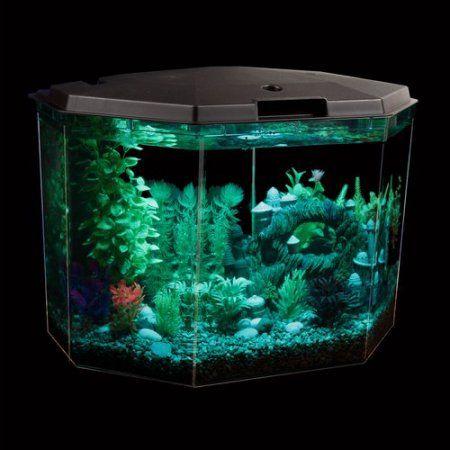 17 best ideas about aqua culture on pinterest 1 gallon for One gallon fish tank
