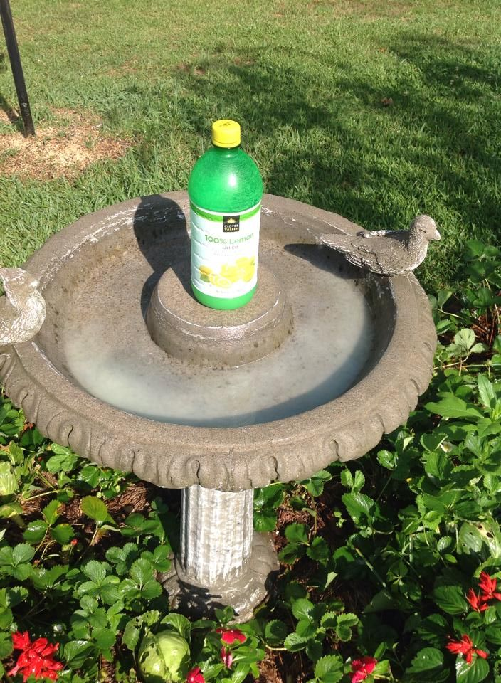 20 best images about how to clean a birdbath on pinterest for Best way to clean cement