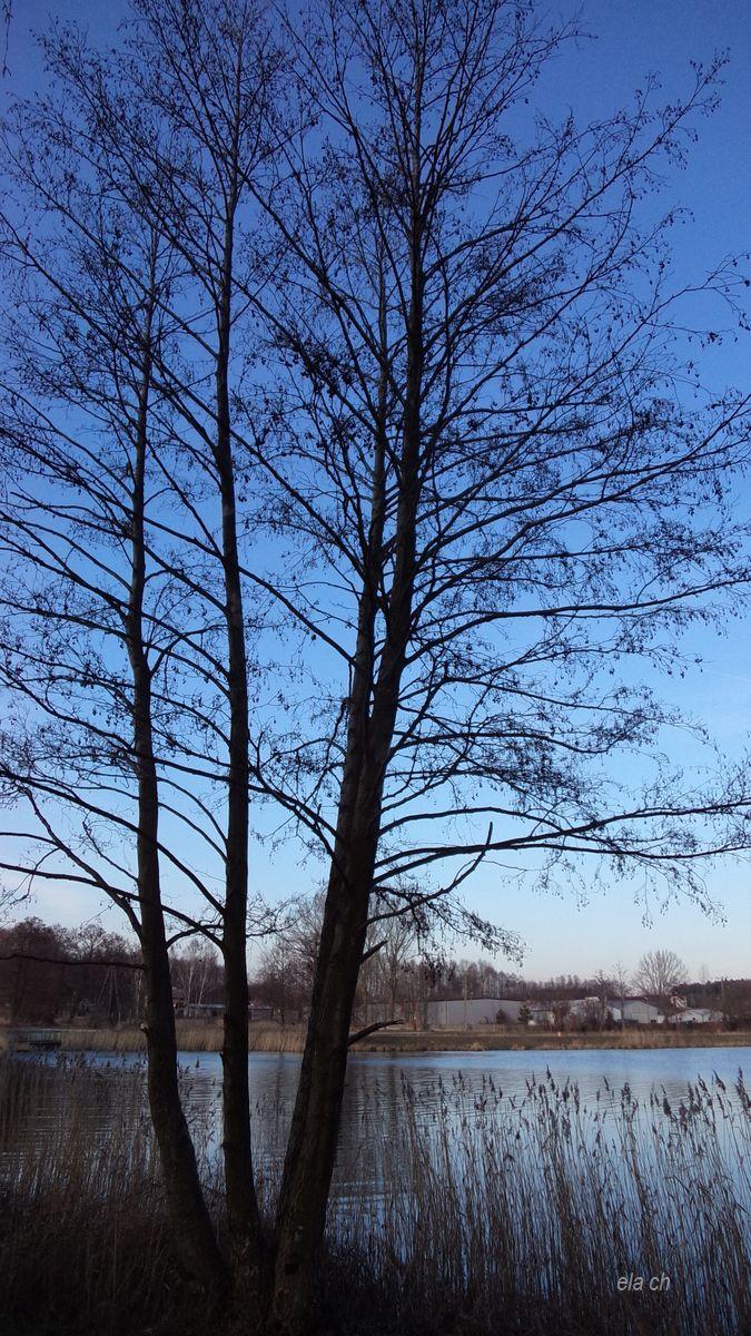 Samotne drzewo nad zalewem