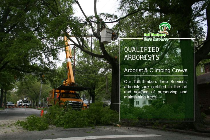 We have highly trained arborists who will never let you down in all your tree demands.