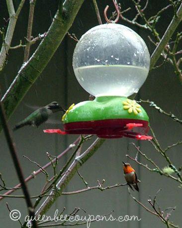 Homemade hummingbird food (nectar) recipe - Queen Bee Coupons & Savings