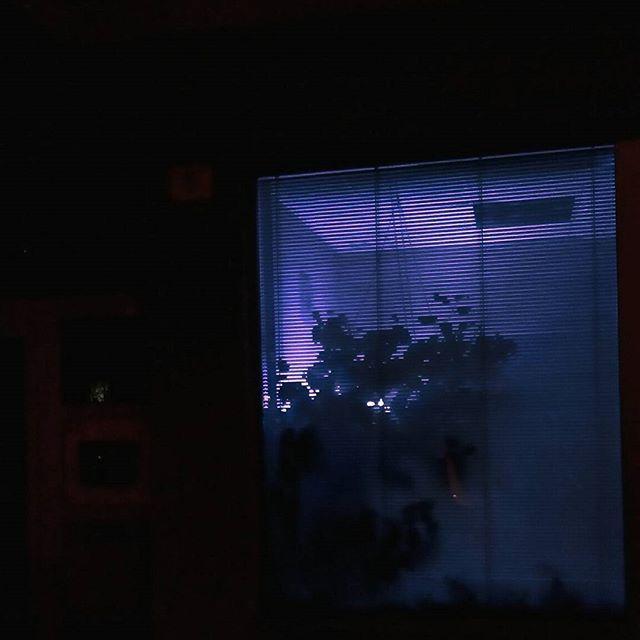 🌴💡. . . . . . . #night #light #neon #plants #plantstagram #neonlights #purple #blacj