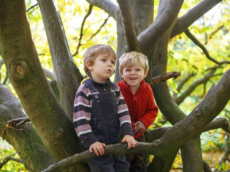 Forest Kindergartens: Where Mother Nature is the Teacher in an Outdoor Classroom