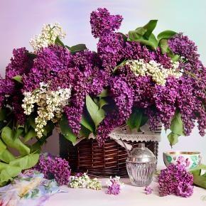 lilacs: Colors Purple, Teas Time, Flowers Arrangements, Flowers Power, You, Romantic Shabby, Lilacs, Shabby Vintage,  Flowerpot