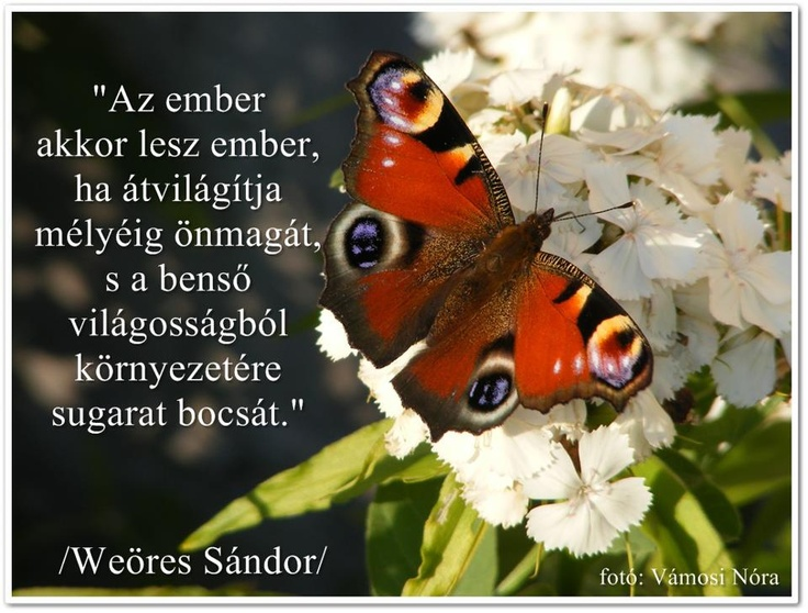 Weöres Sándor idézete az önismeretről. A kép forrása: Vámosi Nóra